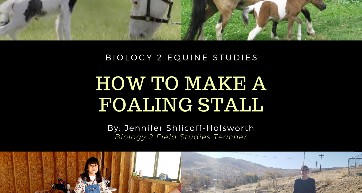 Create a Safe Foaling Stall- Biology 2 Class